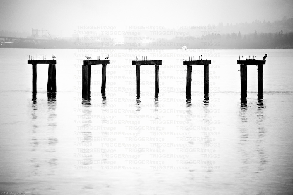 Posts from a docks in the ocean with birds sitting on them.
