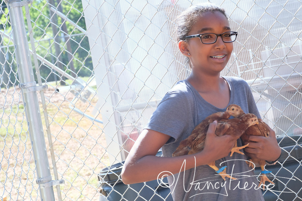 These pictures were taken at JT Williams Secondary Montessori School. They raise chickens as part of the Agricultural Science pathway, which is required for all Montessori students.  Teacher is Katherine Pair.