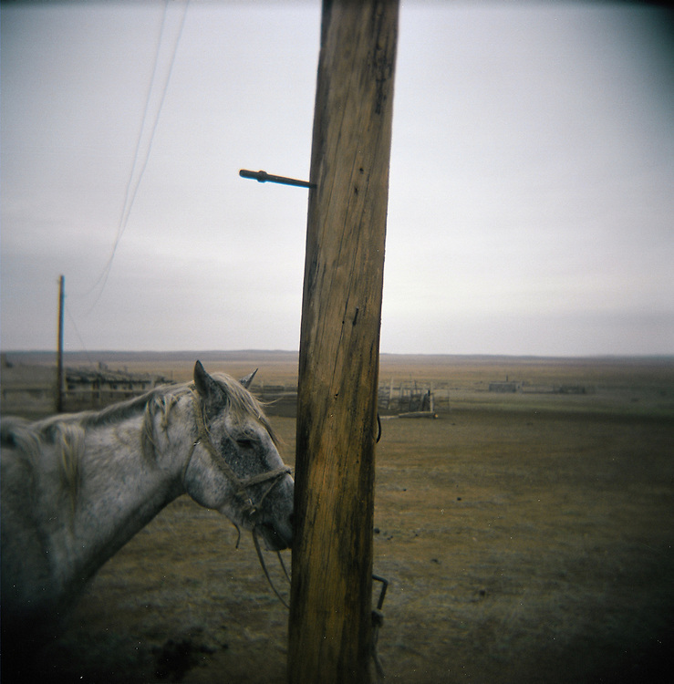 CREDIT: DOMINIC BRACCO II..SLUG:PRJ/KAZAKHSTAN SHEEP HERDERS..DATE:10/23/2009..CAPTION:A shepherds horse tethered to a pole. The herders live near a radio active lake which was made during the 1970s as part of an experiment by the USSR to create lakes from atomic bombs. The lake is in an area known as The Polygon, a test site for more than 400 of the Soviet Union's nuclear weapons.