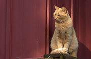 Pretty orange cat out side