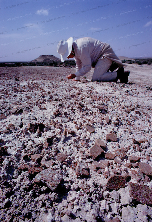 Jose Bonaparte investigates a field of dinosaur egg shell in Patagonia, Argentina.