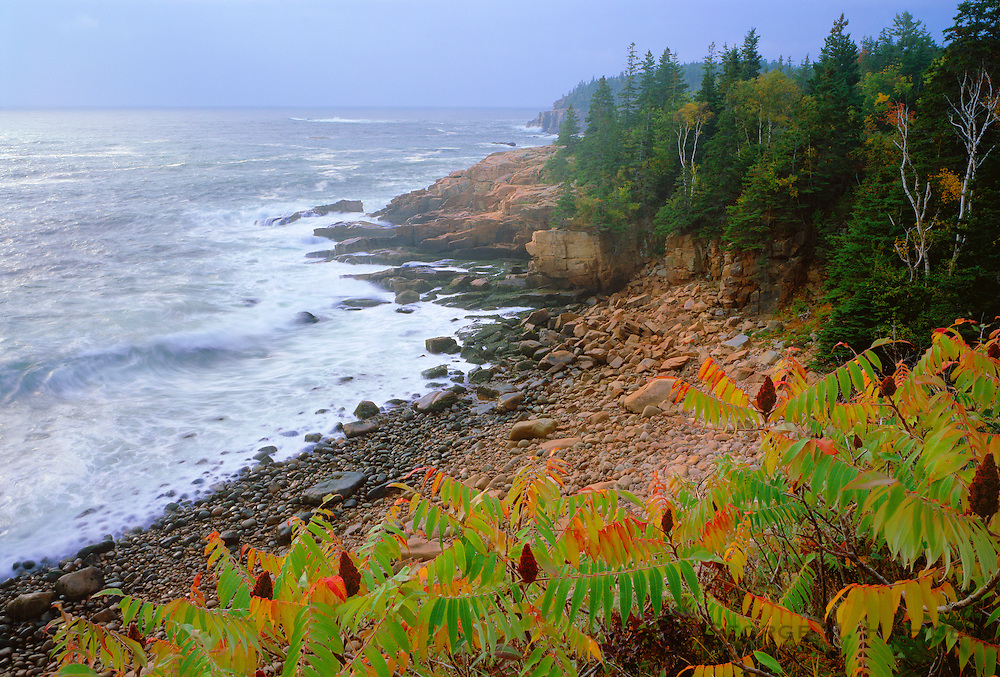 0901-1015LVT ~ Copyright: George H.H.Huey ~ Monument Cove with storm waves and red sumac with fruit [autumn] on the east shore of Mt. Desert Island. Frenchman's Bay, Atlantic Ocean. Acadia National Park, Maine.