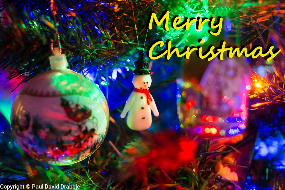 Christmas Tree<br />  20 December 2016<br />  Copyright Paul David Drabble<br />  www.pauldaviddrabble.co.uk
