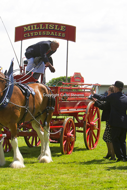 Mr Hugh Ramsay's Millisle Clydesdales Team of Flash, Glen, Ivy &amp; Ricky<br /> Winners of the Team Turnout Class