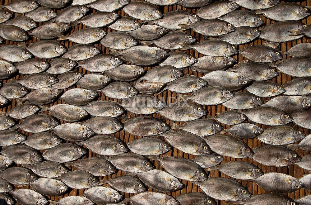 Sun-drying fish, Papagaran island, Komodo National Park