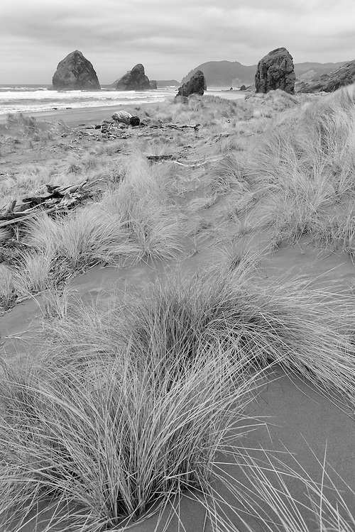 Cape Sebastian South Shoreline Surf Grass - Oregon Coast - Black & White