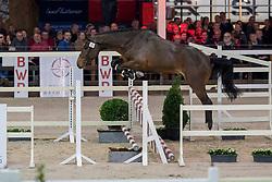 021, Romeo van de Zeshoek<br /> BWP Hengstenkeuring -  Lier 2020<br /> © Hippo Foto - Dirk Caremans<br />  17/01/2020