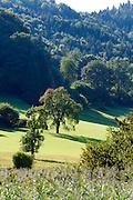 Landschaft Halbinsel Bodanrück, Bodensee, Baden-Württemberg, Deutschland
