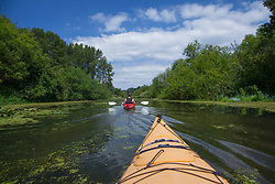 North America, United States, Washington, Be;;evie. kayaking in Mercer Slough Nature Park
