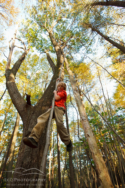 A nine year old boy climbs a tree in the forest at Elmwood Farm in Hopkinton, Massachusetts.