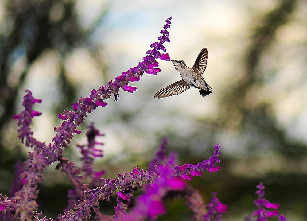.000125 seconds in the life of a hummingbird
