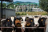 Viggiano, 13/06/2015: Azienda agricola di Sassano e postazione ENI Monte Alpi 1 - Farm and drilling plant ENI Alpi 1
