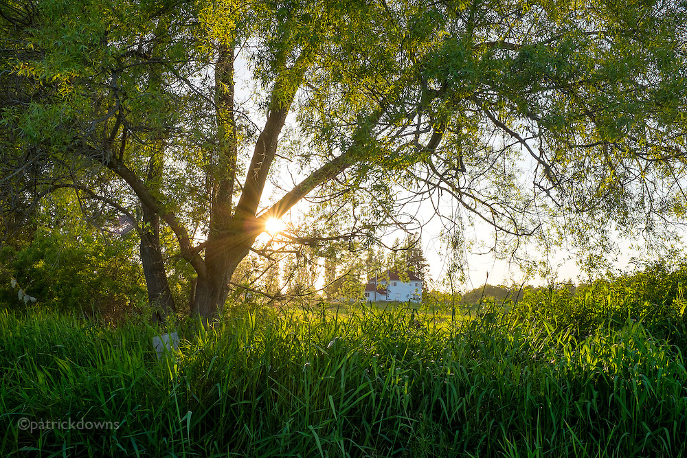 The sun heads to the horizon just weeks away from summer, as a 100 year old farmhouse peeks through spring leaves. The pasture grass at the edge of a hayfield is nearly head high by now. Agnew, near Port Angeles, WA