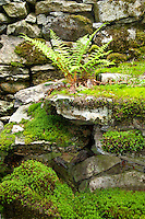Ticino, Southern Switzerland. Verdant mosses and ferns on a grey stone wall.
