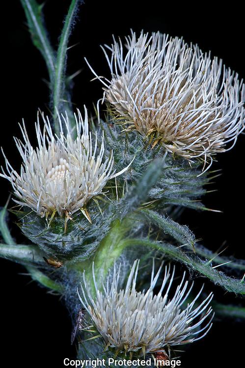 Wild Flowers, Bow River., Alberta, canada, Isobel Springett