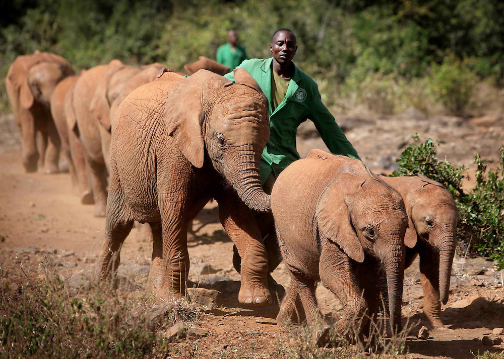 13 orphaned elephants currently live at the sanctuary. The keepers stay with the orphans 24/7.