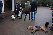 A tired pet dog smells another breed being walked with its family on 1st January 2017, at the Serpentine in central London, England.