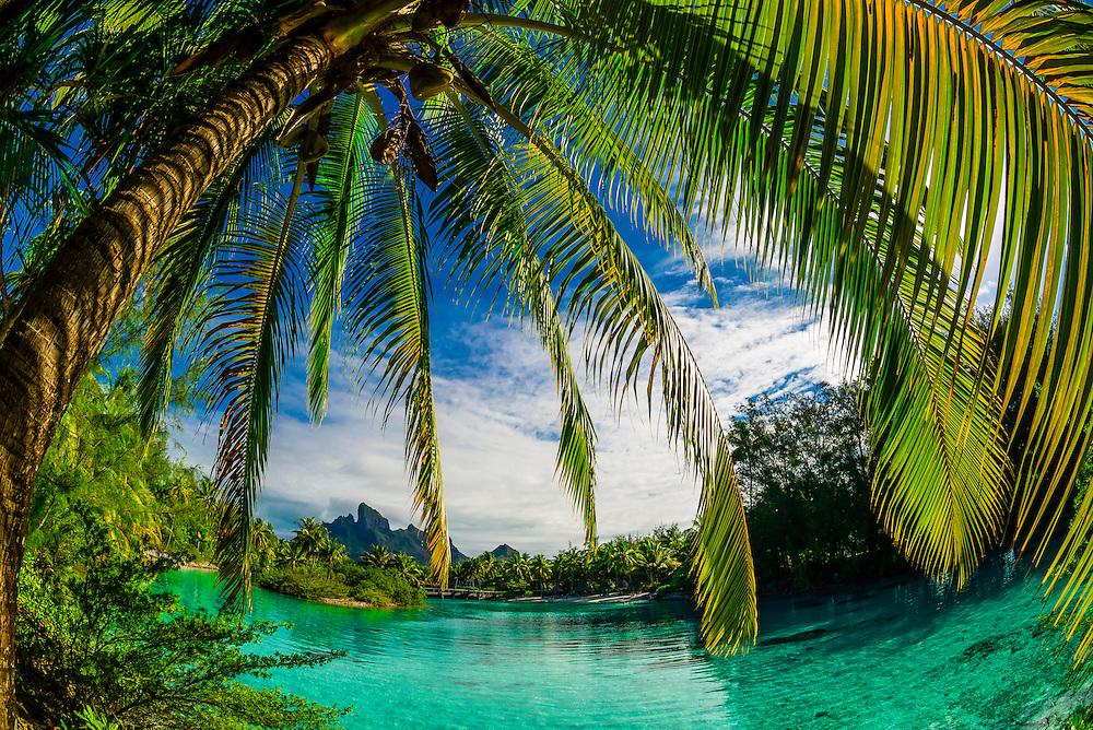 Palm trees and lagoon, Four Seasons Resort Bora Bora, Motu Tehotu, Bora Bora, French Polynesia