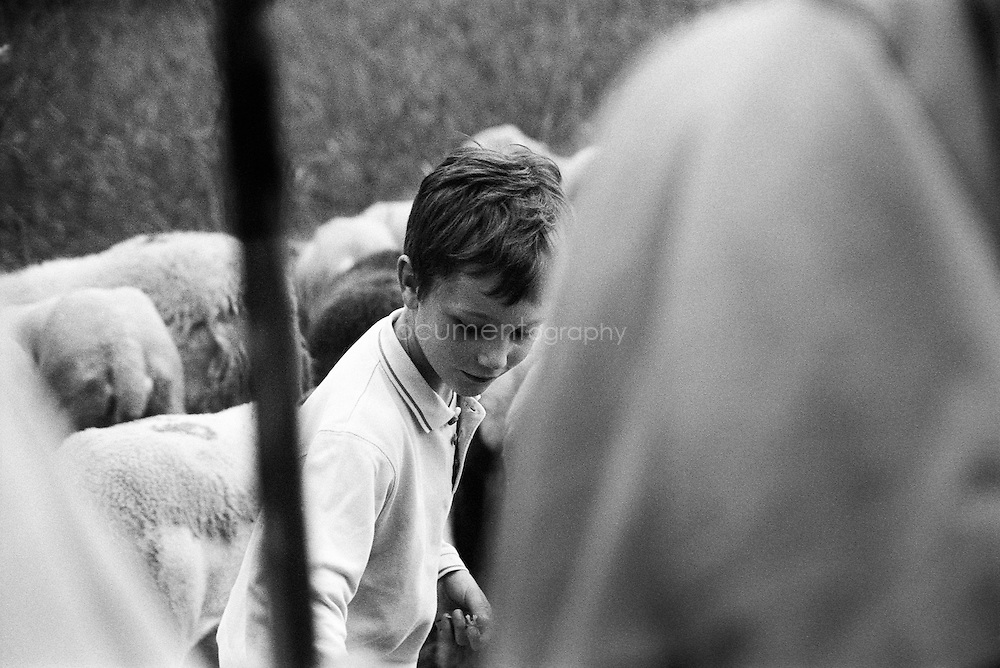 A boy plays with the sheep during the summer transhumances in the valley of Bethmale in the Pyrenees, France.