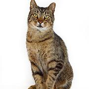 20150612 Tabby Cats