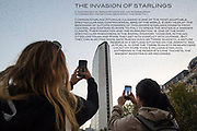 Every year, at the beginning of autumn, the migration of the common starlings (Sturnus vulgaris) stops in Milan. Many travelers leaving the Central Station are fascinated by the spectacle of birds flying above Piazza Duca d'Aosta and around the Pirelli Tower after spending the day feeding in rural areas.
