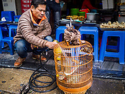 "22 DECEMBER 2017 - HANOI, VIETNAM: A man cleans his song bird's cage in front of a street food shop in the old quarter of Hanoi. The old quarter is the heart of Hanoi, with narrow streets and lots of small shops but it's being ""gentrified"" because of tourism and some of the shops are being turned into hotels and cafes for tourists and wealthy Vietnamese.    PHOTO BY JACK KURTZ"