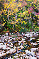 Fall Color Along Roaring Branch River, Green Mountain National Forest, Vermont