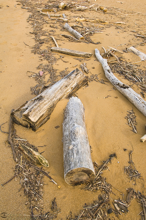 Wood and debri washed up on a beach