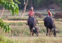 Nepali boys sitting on buffalos, Bardiya, Nepal