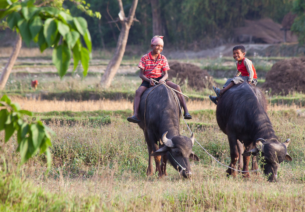 Nepali boys sitting on buffalos, Bardiya, Nepal