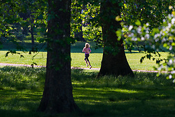 Green Park, London, June 6th 2016. A jogger runs through the sunshine in London's Green Park as weather forecasters predict temperatures for London to be in the mid-twenties.