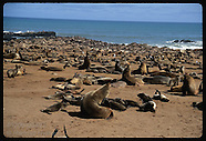 08: MISCELLANY CAPE CROSS SEALS