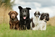 Posh - Hundesalon