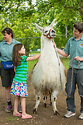 Staff at Zoo Boise holding lama while child pets it.