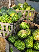 A watermelon harvest is displayed for sale in wooden bins at a farmer's market, Minnesota, USA.