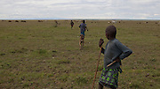 May 2010. Kenya. Samburu herd boys herd their livestock to a salt pan near Kisima, unfit for human consumption. Most of the boys we met here, attended school from 7pm in the evenings after doing a day's work looking after the family lifestock.