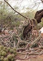 Cactus, Phoenix Arizona