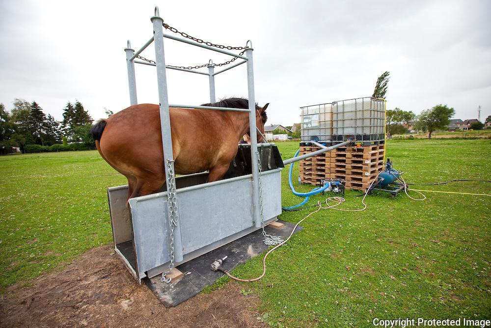 359817-nieuwe uitvinding-de paardenjacuzzi-boekstestraat Perk