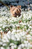 2015_02_18_snowdrops_SSI