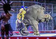 The elephants perform during the El Riad Shrine Circus on Monday night at the Corn Palace. The circus continues with performances on both Tuesday and Wednesday at 4:30 p.m. and 7:15 p.m. each night. (Matt Gade / Republic)
