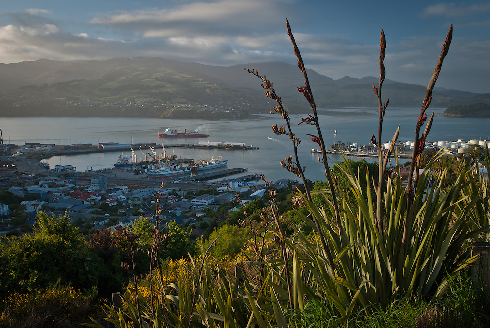 View of the Wellington ferry leaving Lyttelton harbour early morning, framed by flowering flax and native bush