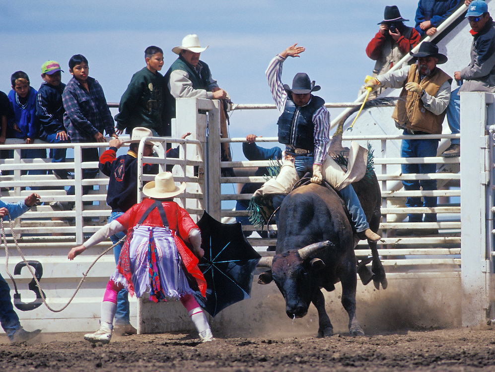 Cowboy in bull riding event at Tygh Ridge All-Indian Rodeo; Wasco County, central Oregon.