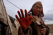 Tanning of reindeer skins. Kamchatka, Russia