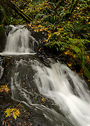 Sheppard's Dell in the Columbia River Gorge