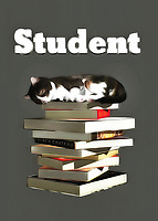 This is a fine art piece that is definitely going to appeal to anyone who has gone through college. If you know a thing or two about late nights, lugging books around, and studying well into the early hours of the morning, then you will definitely relate to everything in this piece. You are going to note that the adorable cat in this piece has likely been studying for a long time. We can see that it is fast asleep on top of a pile of books. A piece such as this can make for a welcome addition to any space.