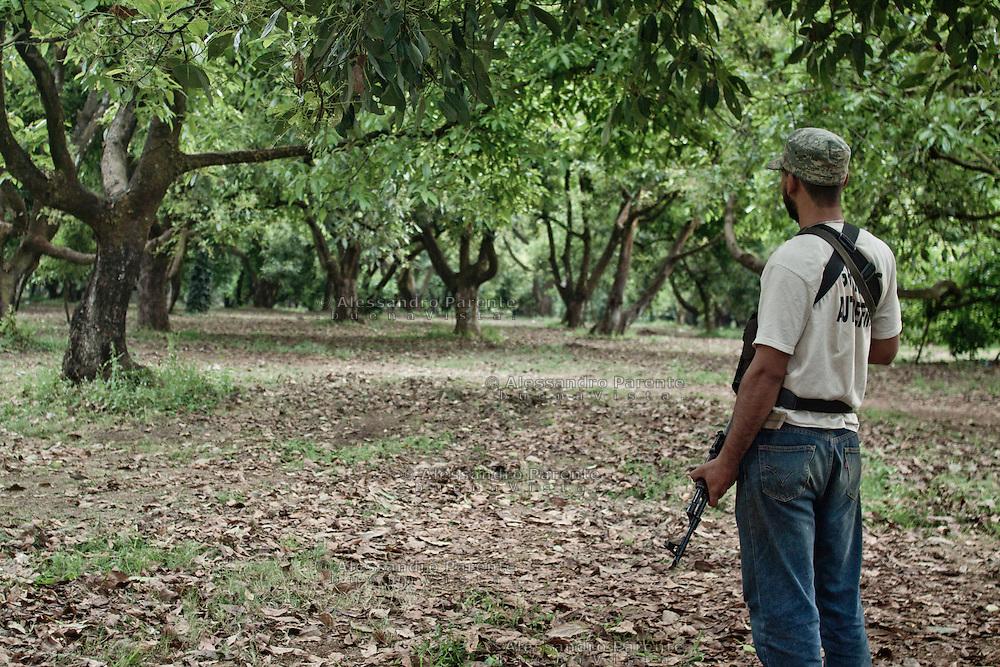 """Autodifesa in un campo di avocado. Michoacan è uno degli stati più ricchi del messico, proprio per il commercio del suddetto frutto. I coltivatori sono  costretti a pagare la cosiddetta """"quota"""" per ogni pianta alla malavita. Una delle motivazioni principali che li ha spinti a ribellarsi."""