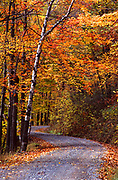Autumn and mountain road in Allegheny National Forest, PA,