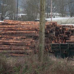 Timber at Seattle Snohomish Mill Company, Snohomish, Washington, US