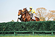 27 March 2010 : Matt McCarron and FOUR SCHOOLS (#7) battle over an early hurdle with Jeff Murphy and MAJOR MALIBU.