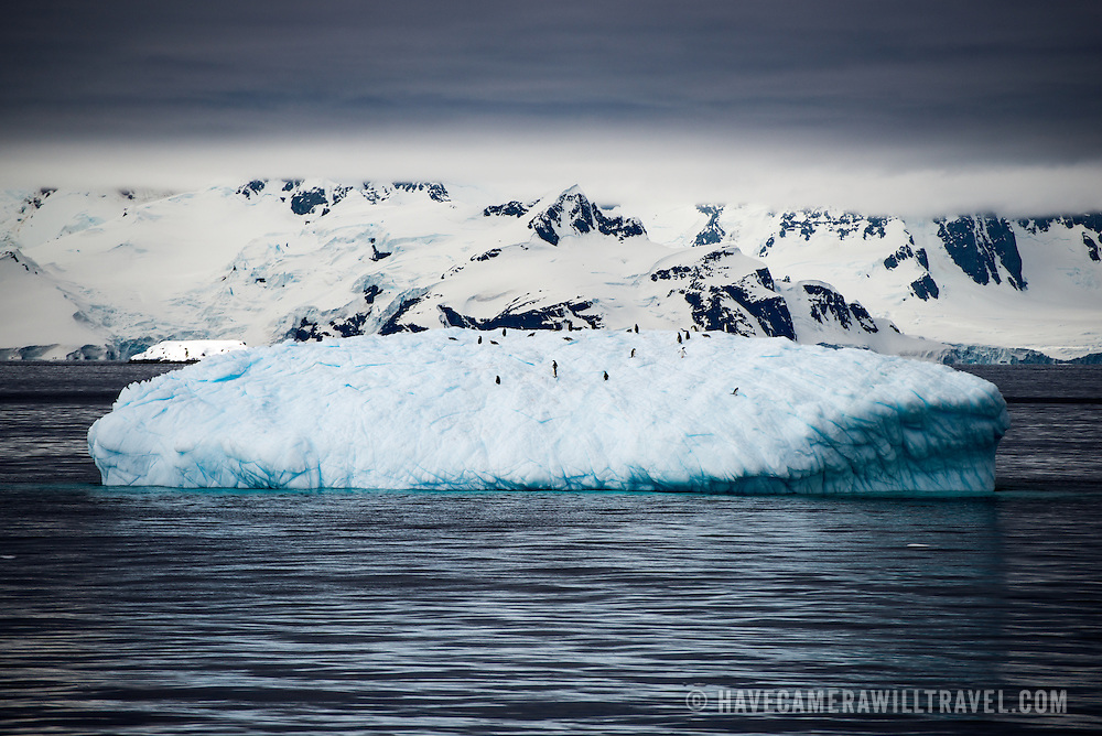 Gentoo penguins hitch a ride on iceberg floating in the channel near Melchior Island in Antarctica.